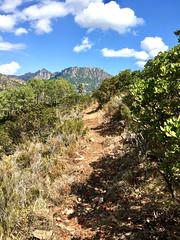 Descente retour HR12 : état du chemin à l'approche du col 535m de Livisanim