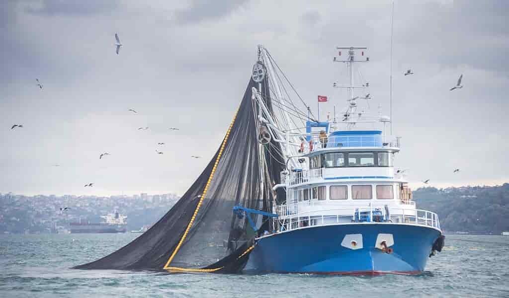 Les écosystèmes d'eaux profondes du Groenland menacés par la pêche