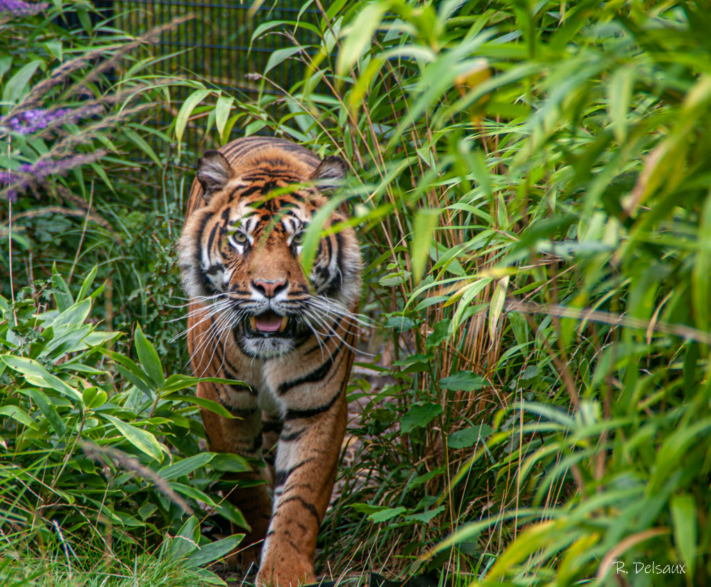 Zoos / Parcs animaliers - Page 30 51441449655_0ec8c79822_o