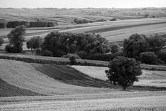 Field of Black & White