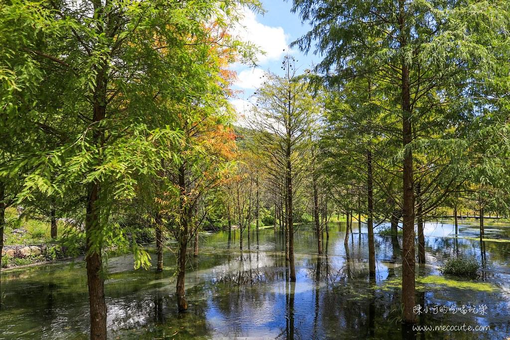 宜蘭秘境:三層坪農塘景觀,落羽松新景點!宜蘭版的雲山水