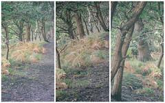 Nettleton Woods