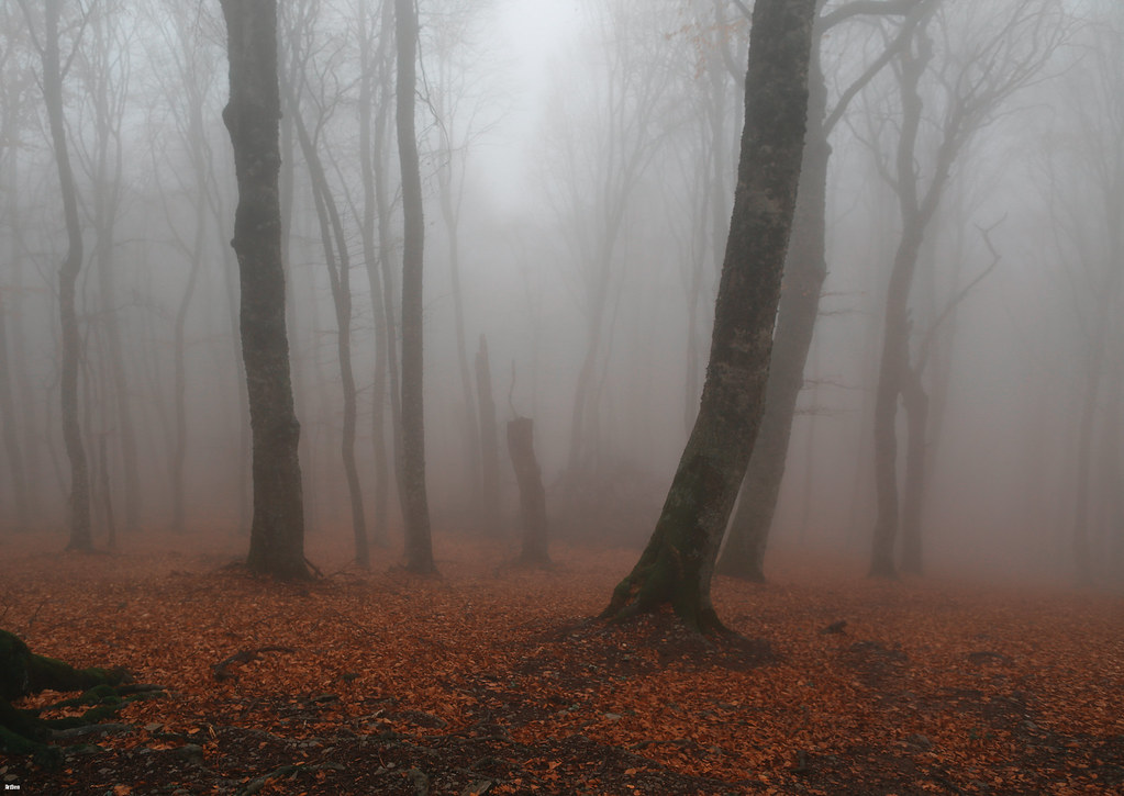 Misty Forest Chatyr dag