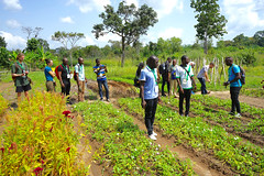 Formation collaborative agroecologie Togo 2019_Collaborative agroecology training, Togo, 2019. Photo Christian Auxemery 6