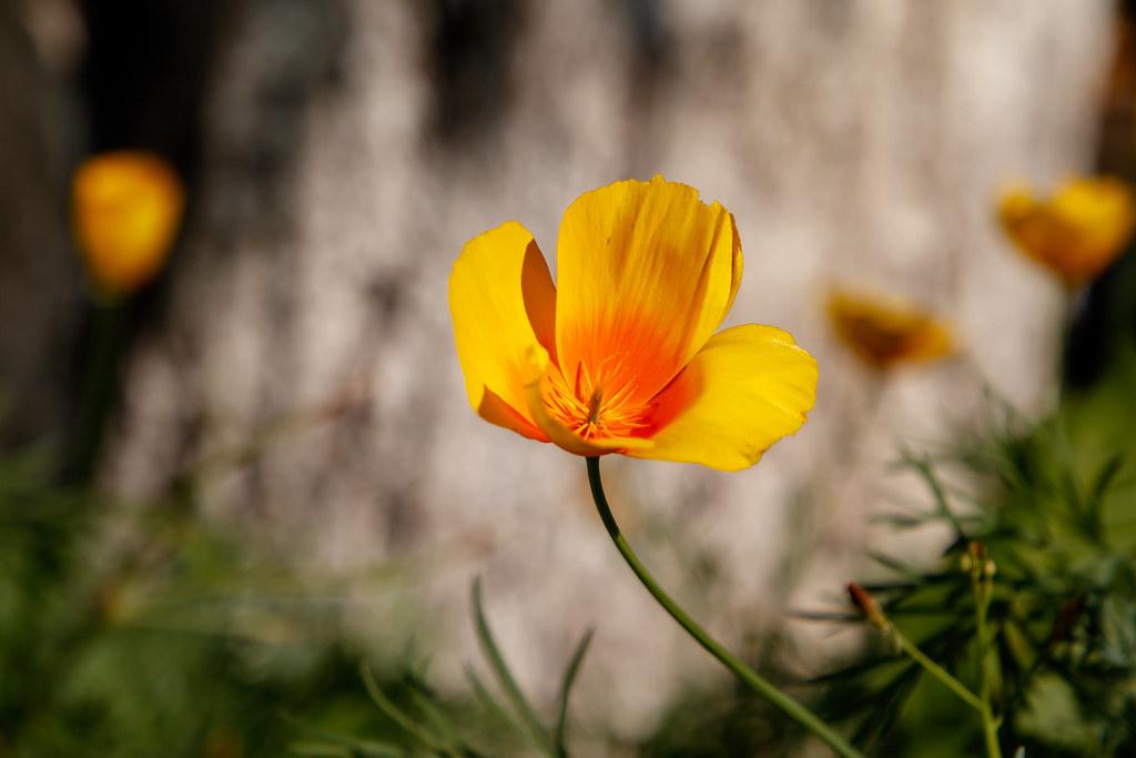 yellow_flowy