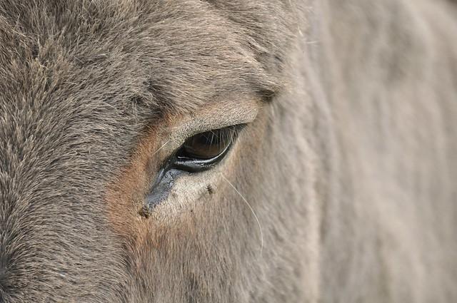 The eye of a donkey...Explore #119
