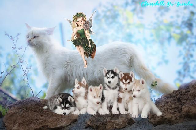 La fée Chloé et ses amis
