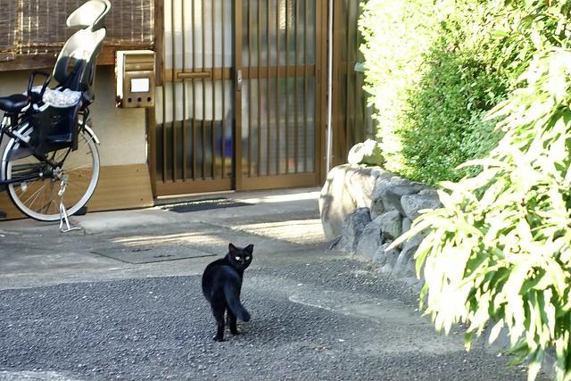 Today's Cat@2021−09−10