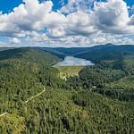 Bavarian Forrest