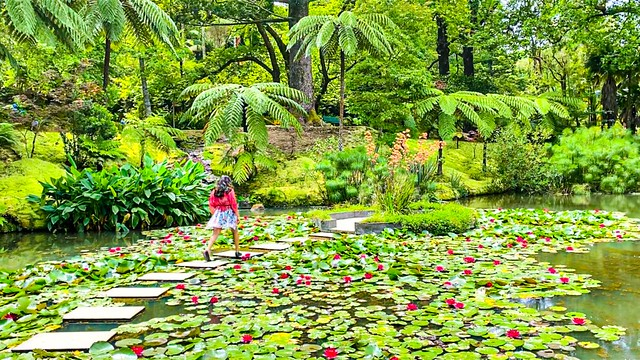 the enchanted lotus pond