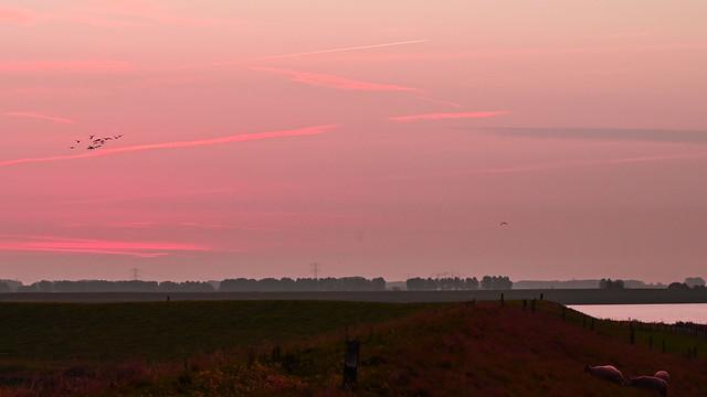 trekvogels voor zonsopgang
