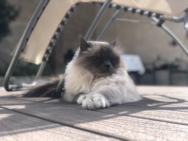 Notre princesse Luna à l'ombre 👍👍👍