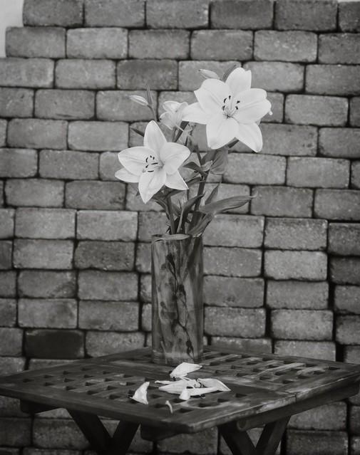 White flowers - paper negative