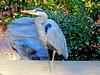 fcaec-duke-gardens-durham-bird1