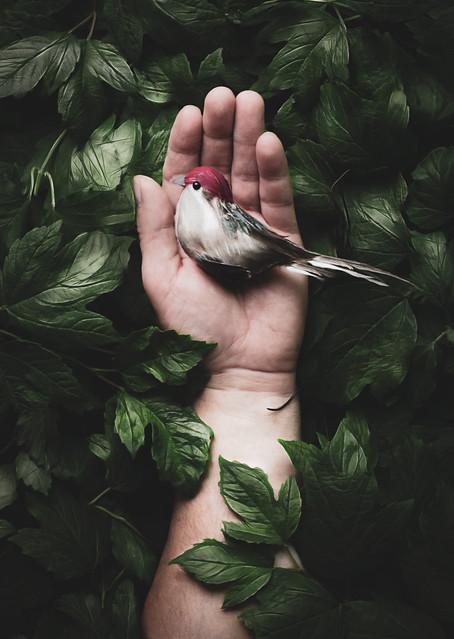 Bird Nest Hand2-2