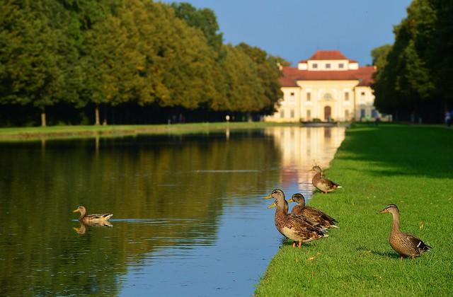 Oberschleißheim - Ducks