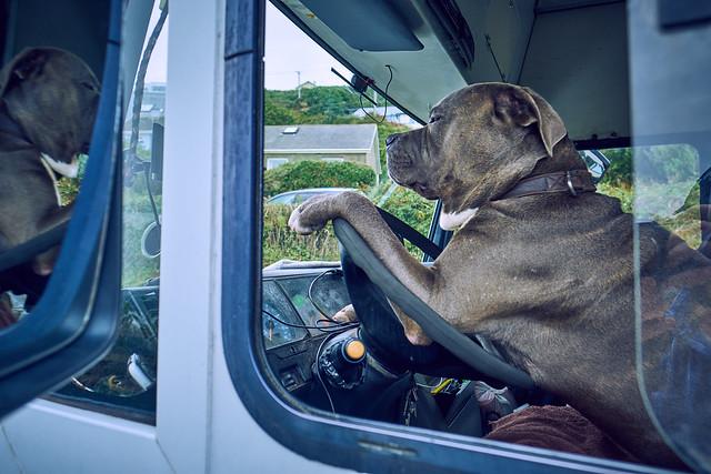 Dog at the Wheel