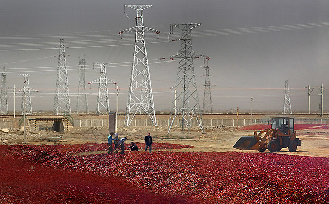 Drying chili peppers , Xinjiang , China