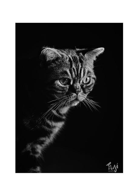 Portrait-Filou