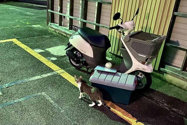 Today's Cat@2021−09−11