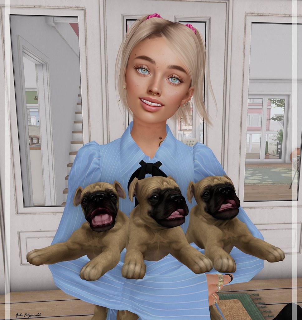 Jian great danes puppies - Kuni