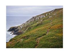 Coast path to St Ives  (由  Su Bayfield