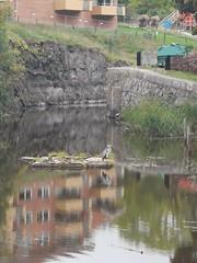 Arne Häger på sin flotte vid slussholmen, Åkers kanal i Åkersberga.