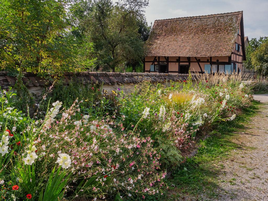Les fleurs de l'Ecomusée d'Ungersheim... 51449003097_48c7787ab4_b