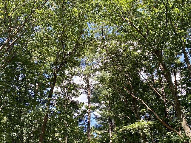 Random Photos! - The Green Forest.