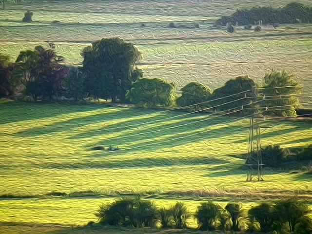 Somerset Landscape Oiled
