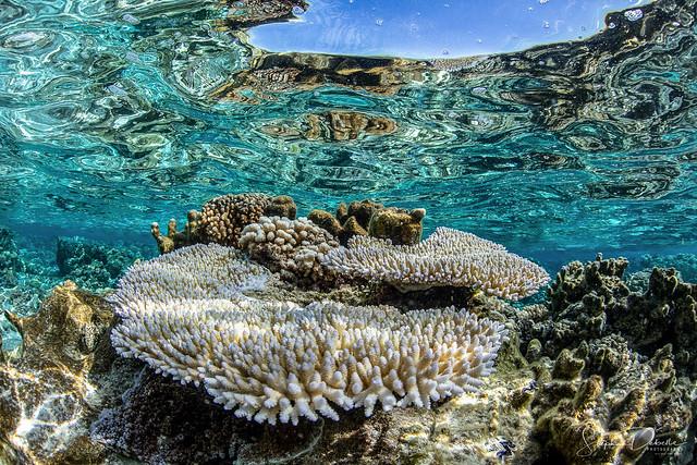 Coral & Fish Bora Bora