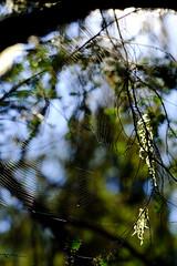 Summer's Spider's Web