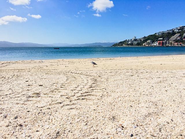 Seagull On Oriental Bay Beach