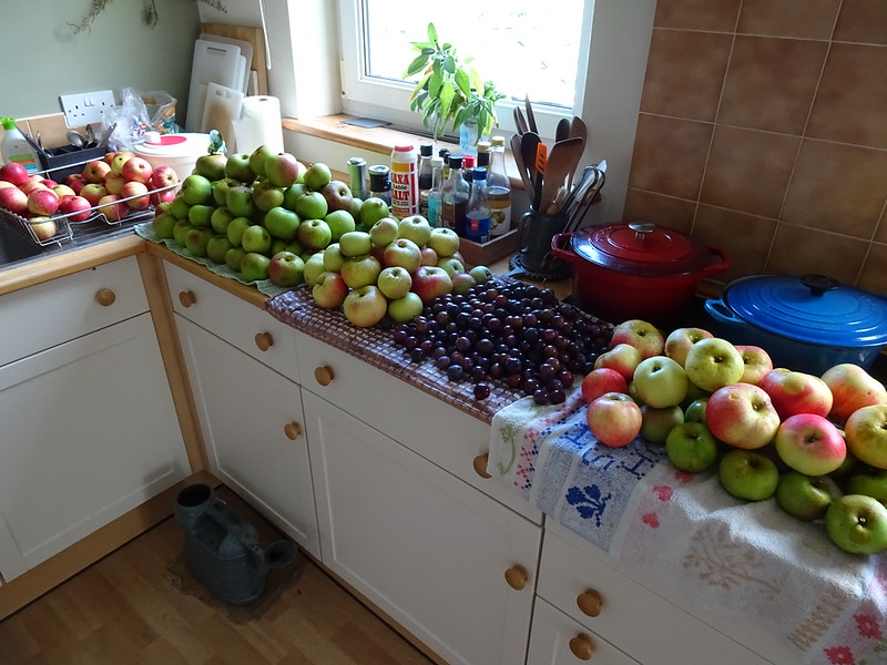 Orchard Harvest 2021: First crop of apples and wild plums