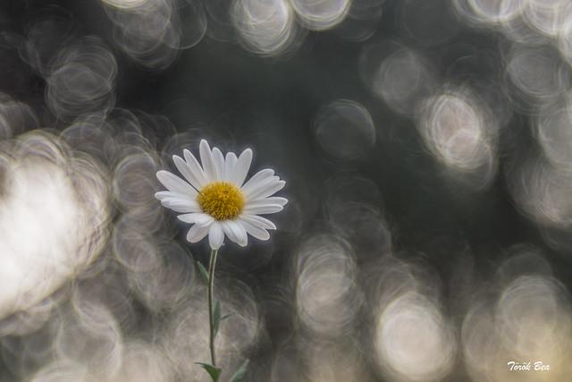 Flower ❤️