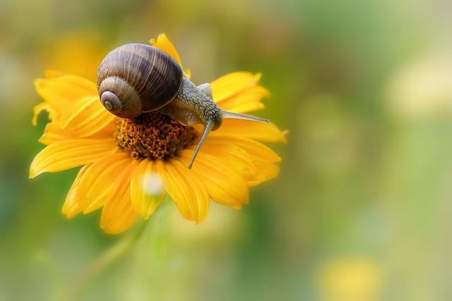 snail on top