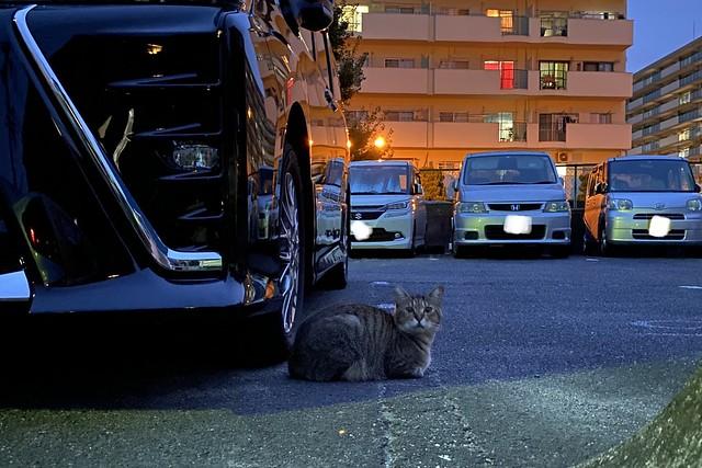 Today's Cat@2021−09−12