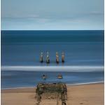 Sea Stumps