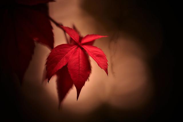 Autumn Saturation
