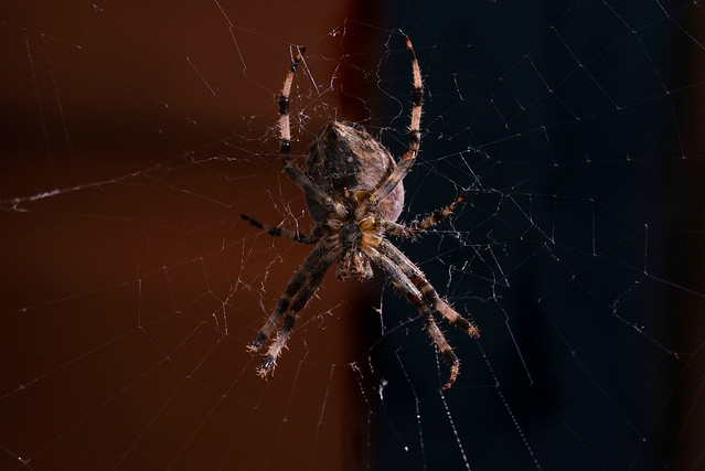 it's the most arachnid-ful time of the year...