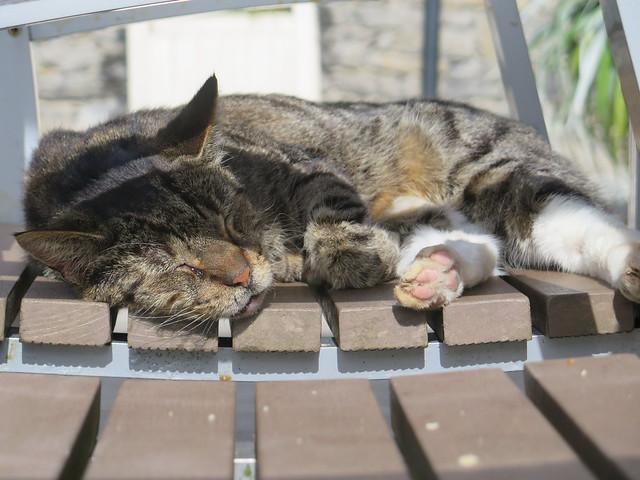 Oldbridge Cat