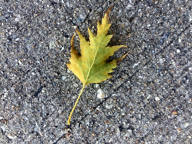 One Leaf On The Ground - Photo by STEVEN CHATEAUNEUF September 12, 2021