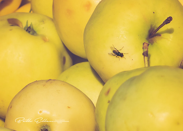 ~Anyone can count the seeds in an apple, but only God can count the number of apples in a seed.