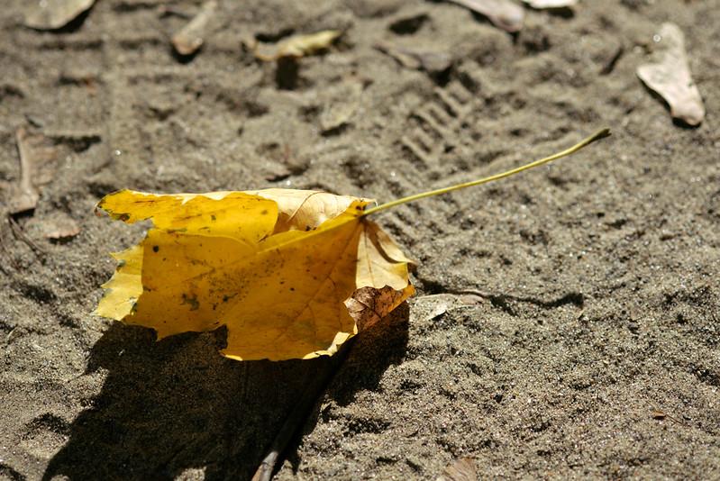 Fallen leaf, Old Croton Aqueduct Trail