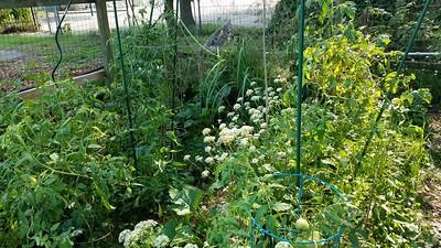 Mid-September Gardening