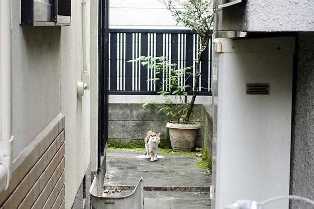 Today's Cat@2021−09−13