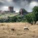 Hammershus Castle ruins