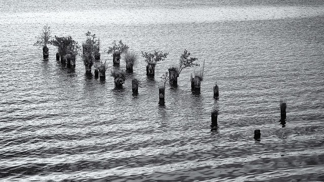 Old piers in the lake