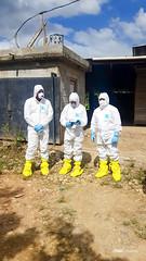 Enfermedad de la Peste Porcina Africana (PPA)