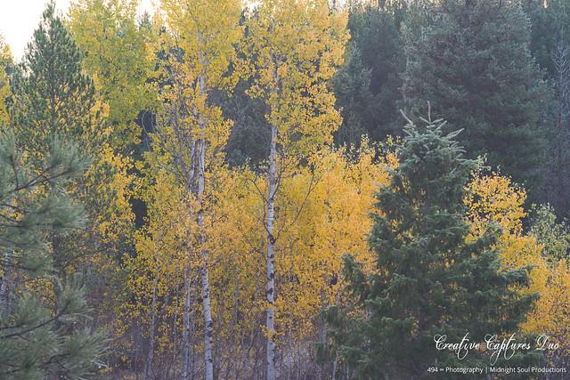 Shades of Autumnal Harmony